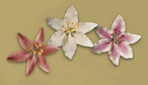 Tragant-Blumenbouquet, nicht essbar, sortiert