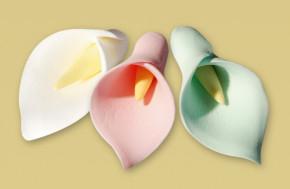 Tragant-Callas, lieferbar in den Farben weiss und sortiert. Bitt