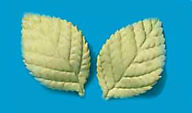 Tragant-Blätter, groß