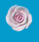 Tragant-Rosen, rosa