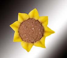 Zucker-Sonnenblumen
