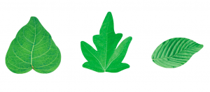 Waffel-Blätter, sortiert, 25-55mm, 200 Stück