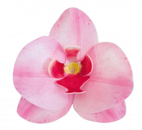 Waffel-Orchidee, rosa, 80mm, 10 Stück