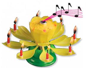 Zauberhafte Kerzen-Blume, blüht auf und spielt